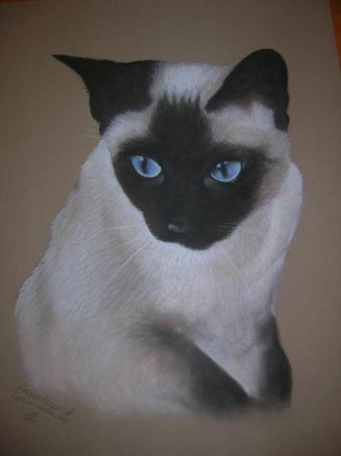 Сиамская кошка, оригинал