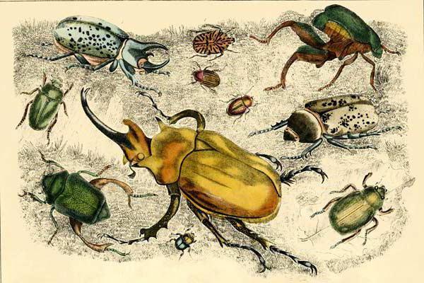 Жуки, насекомые, жуки