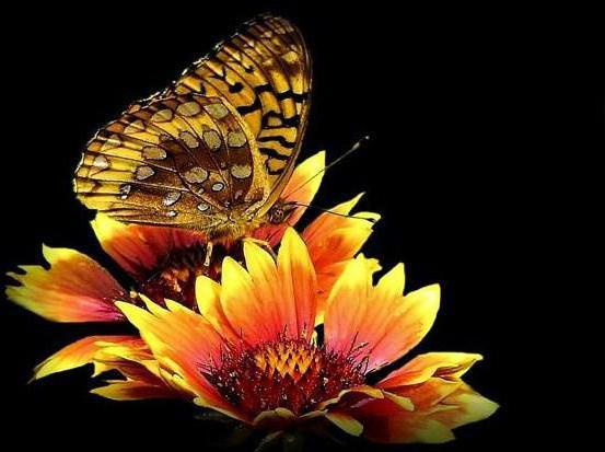 Цветы на чёрном фоне, бабочка
