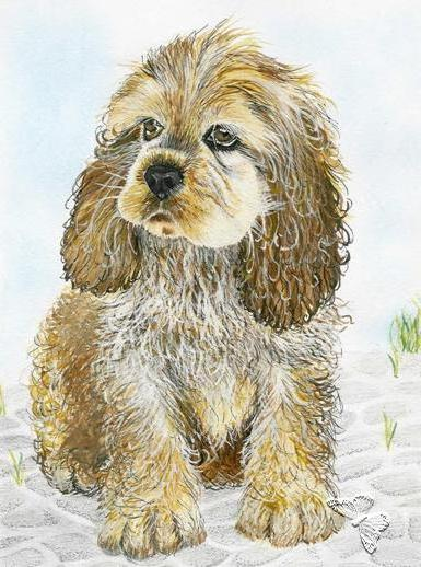 Кокер-спаниель, собака