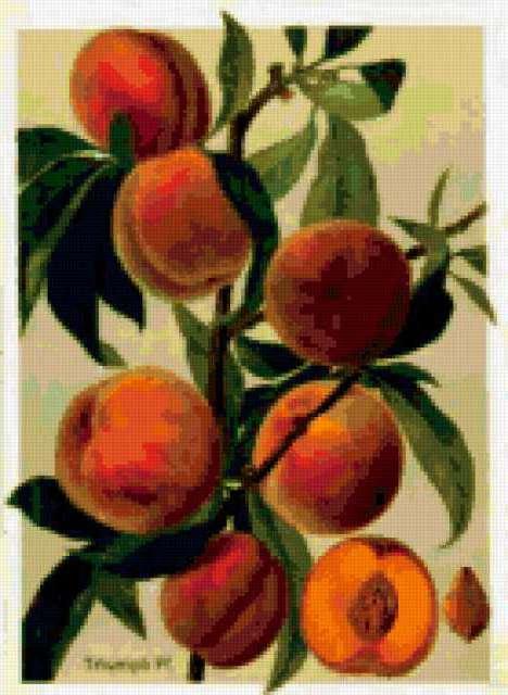 Персики, предпросмотр