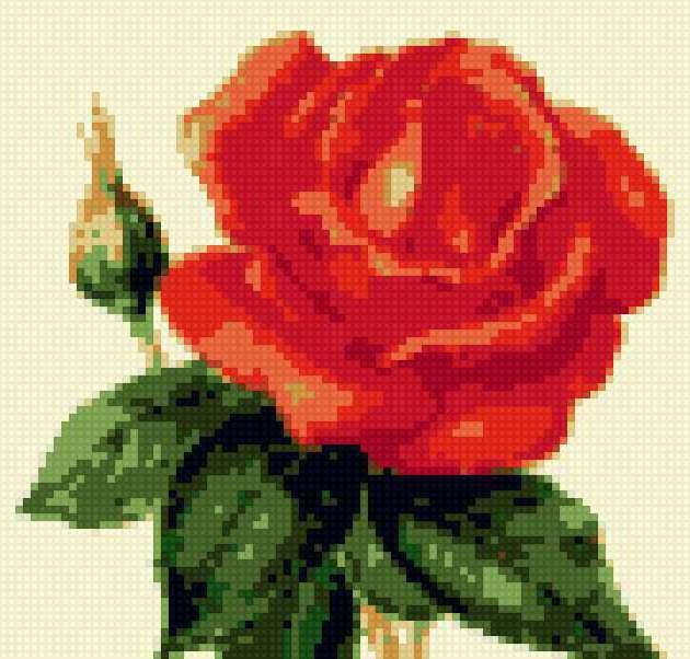 Роза маленькая, предпросмотр