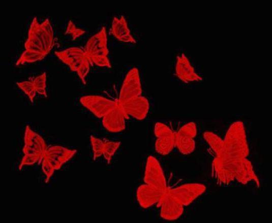 Бабочки на чёрном фоне,