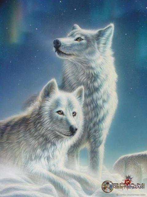 Полярные волки, оригинал