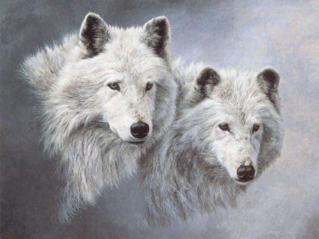 Пара белых волков, оригинал