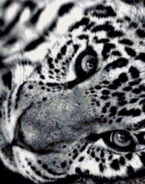 Черно-белый леопард