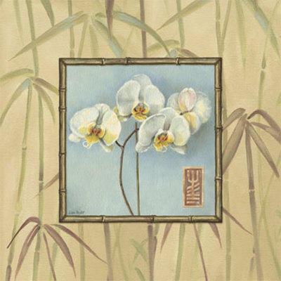 Орхидея 2, орхидея, цветы,