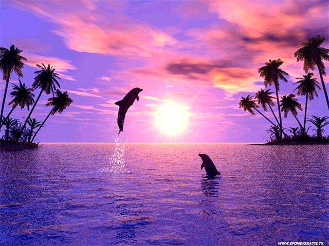 Дельфины,