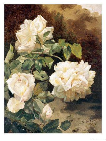 Белые розы, розы, цветы,