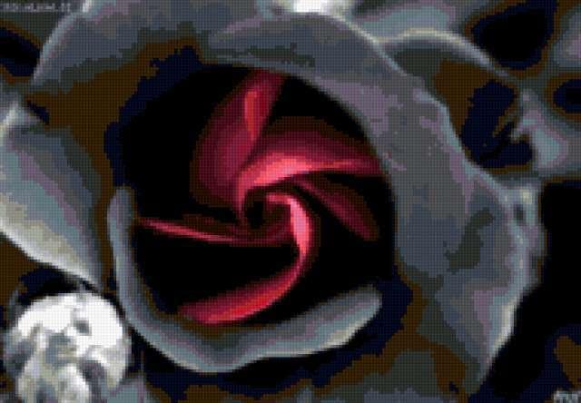 Чёрная роза, предпросмотр