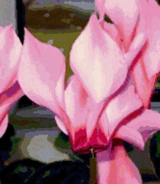 цветы комнатные для близнецов фото