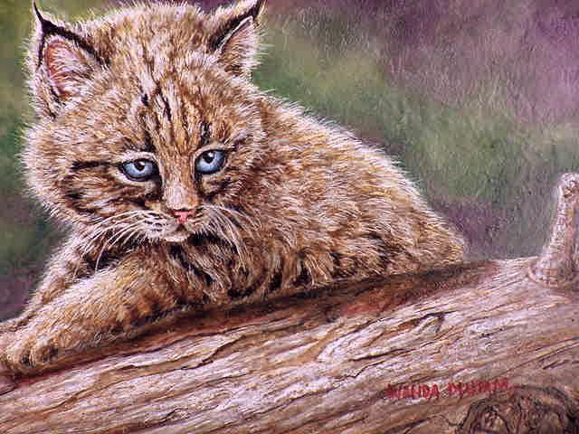 Дикие кошки, оригинал