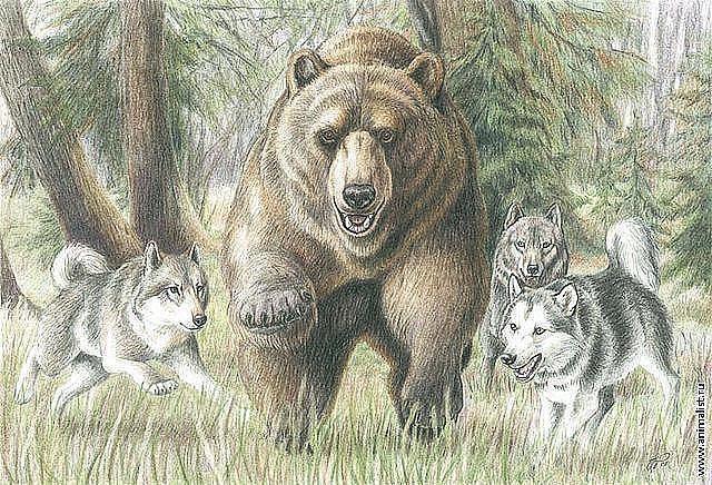Охота на медведя 2, оригинал