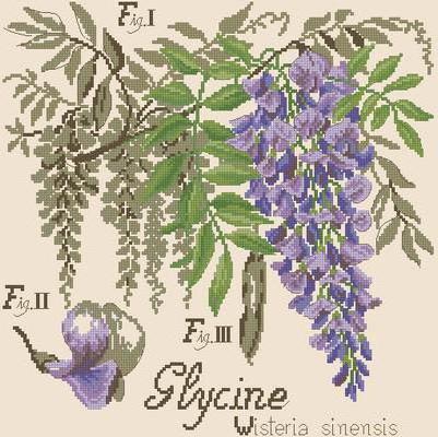 Цветы, цветы, цветок, растение