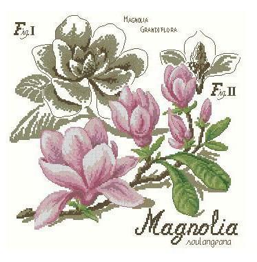 Магнолия, цветы, цветок