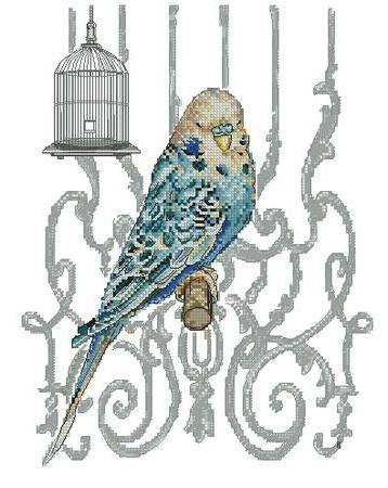 Волнистый попугайчик, оригинал