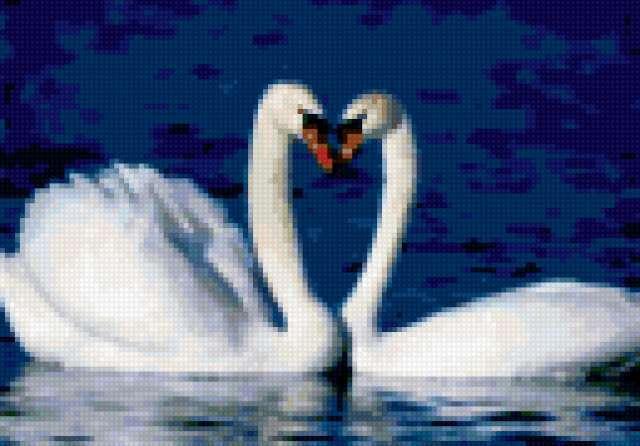 Два лебедя, предпросмотр
