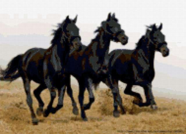 Тройка черных лошадей