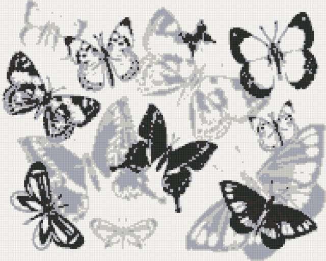Бабочки монохром, предпросмотр