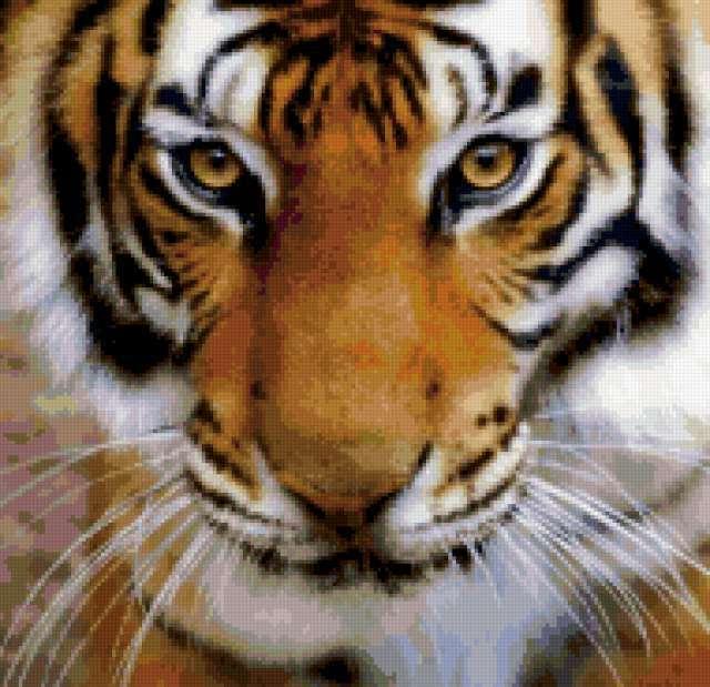Тигриный взгляд, тигр