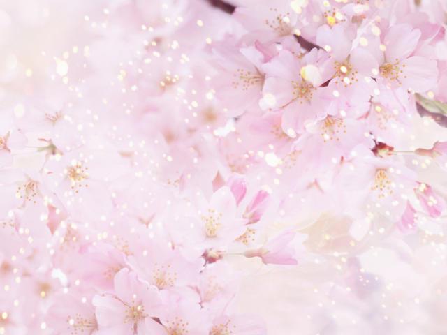 Цветы сакуры,