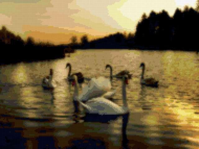 Лебединое озеро, предпросмотр