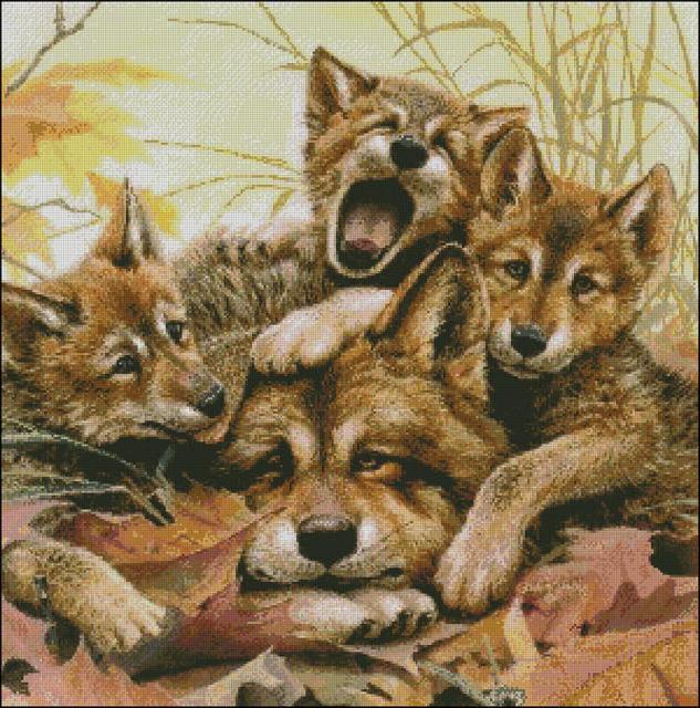 Породы волков с фотографиями 24 породы