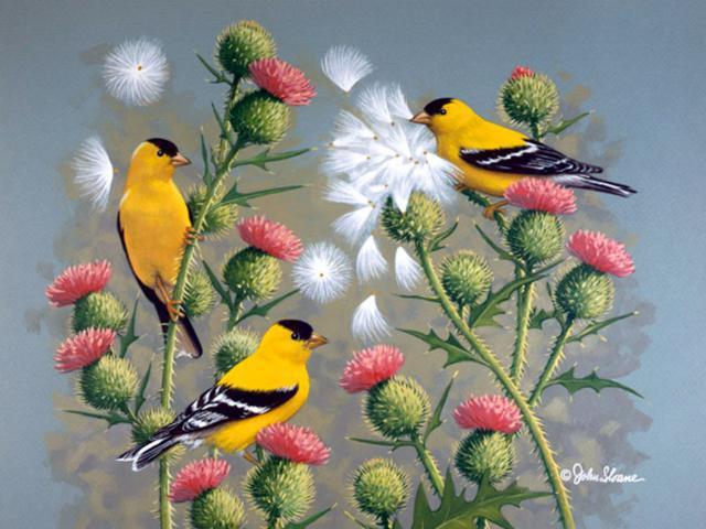 Цветы, птицы, оригинал