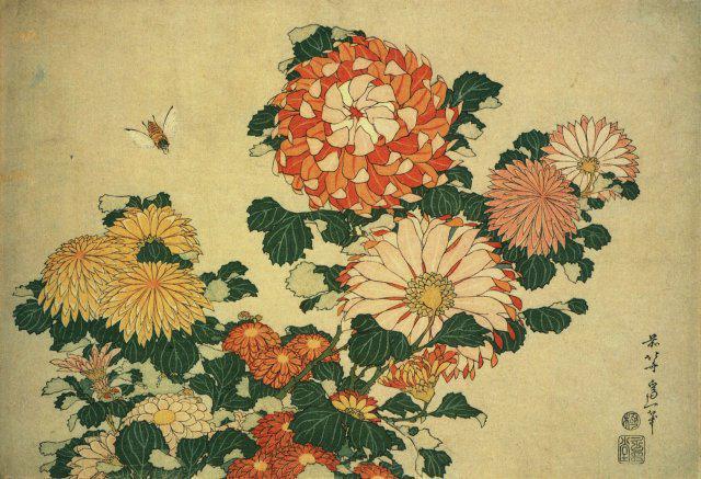 Японские хризантемы, япония