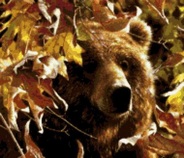 Бурый медведь в осеннем лесу,