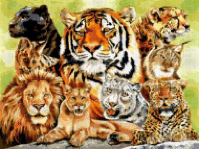 Семейство больших кошек