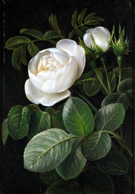 Белые розы, живопись, цветы,