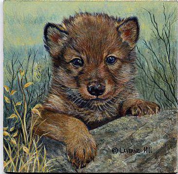 Волчонок, оригинал