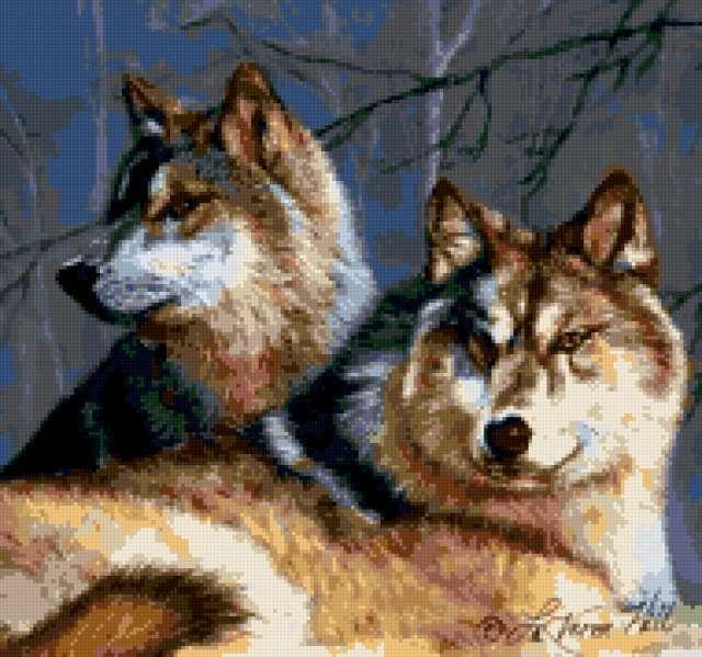Волки, волки, хищники, звери,