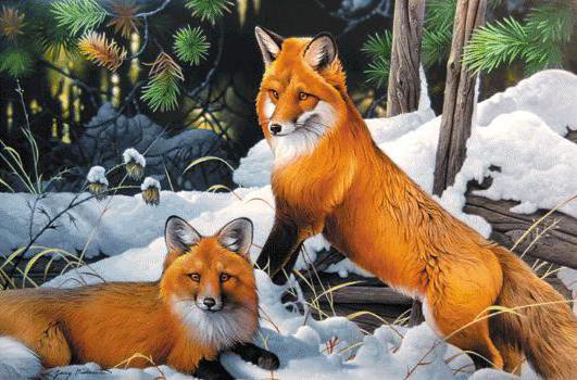 Лисы, природа, пейзаж, зима,