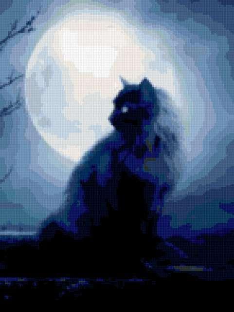 кошки, животные, ночь