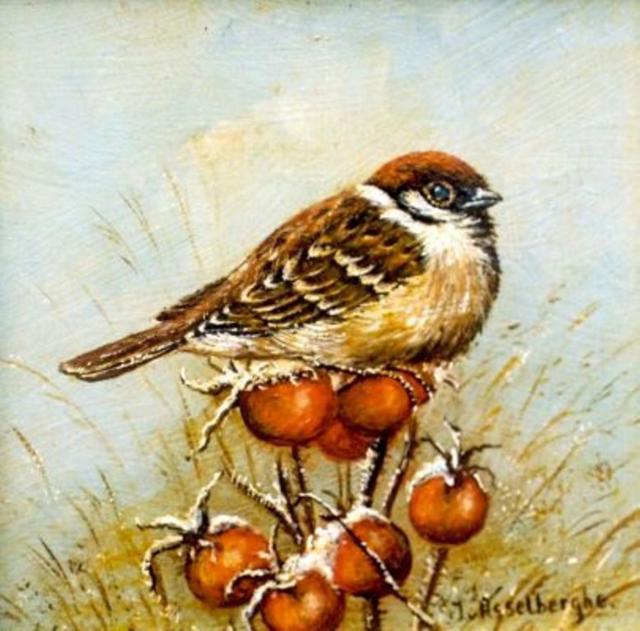 Воробей, воробей, птица, осень