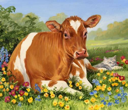 Коровы, коровы