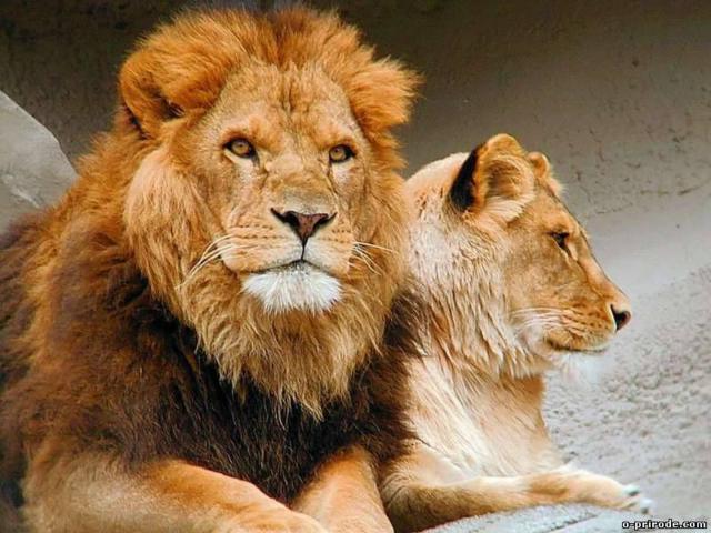 Царь зверей, животные
