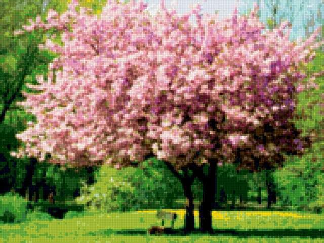 Цветущая сакура, предпросмотр