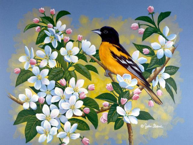 Цветы и птицы, цветы и птицы