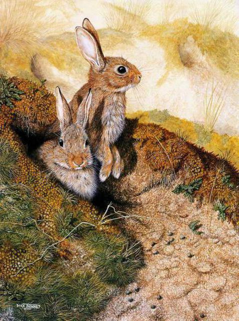 Зайчата, живопись, животные