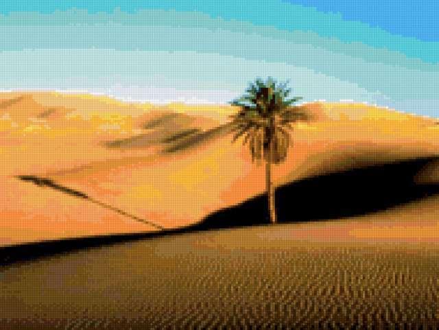 Пальма в пустыне, предпросмотр