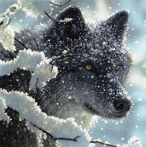 Волк в зимнем лесу, оригинал