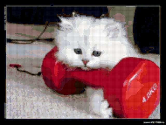 Маленький спортсмен, кошки