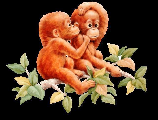 Малышки-обезьянки, обезьянка