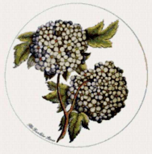 Круглые картинки, цветы