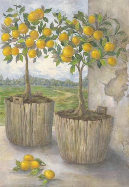 Лимонные деревья, оригинал
