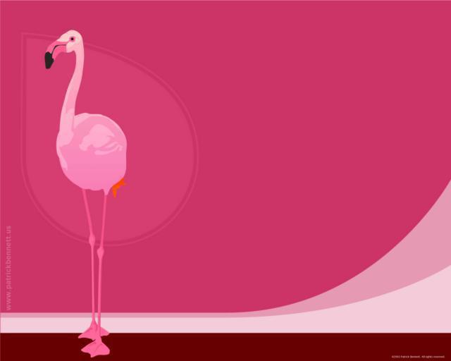 Розовый фламинго, фламинго