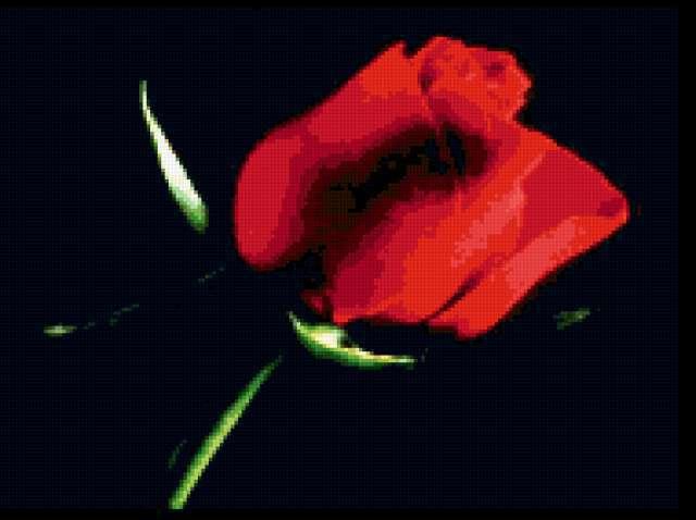 Цветы на черном фоне, цветы